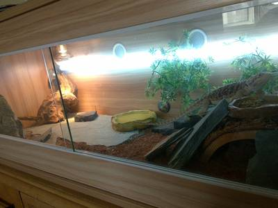 Bearded Dragon Lizard   Vivarium   Accessories