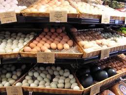 Fertile parrot eggs and Parrots for sale