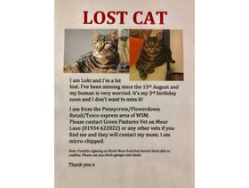 Missing male tabby cat - Weston super mare in Weston Super Mare