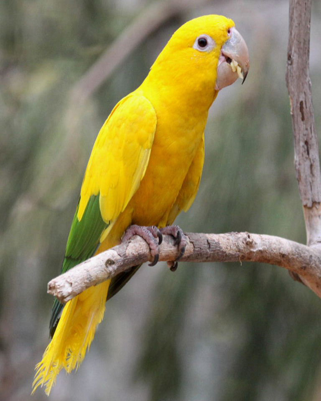 Trained Parrots for Sale (Pets & Animals - Birds) in Houston