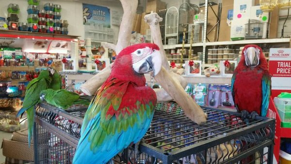 AVAILABLE MACAW PAROT (Pets & Animals - Birds) in HONOLU