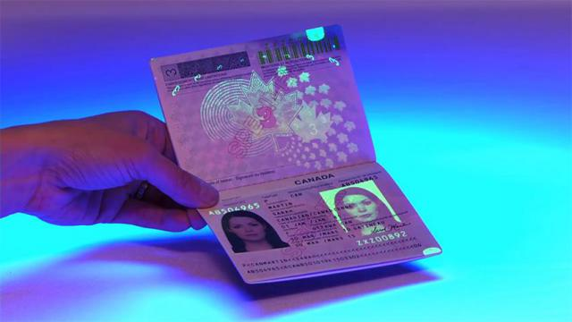 Passports,Driver's License,ID Cards,Visas, USA Green Card,Citizenship (Pets & Animals - Birds) - 1