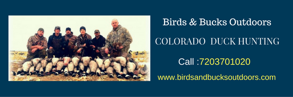 Colorado Duck Hunting (Pets & Animals - Birds) in Castle Pines