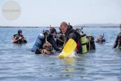 Best Diving in New Zealand at Nominal Price