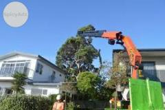 Get Best Tree Trimming in Auckland at Nominal Price