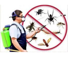 Seeking for Pest Control in Palmerston North at Low Cost