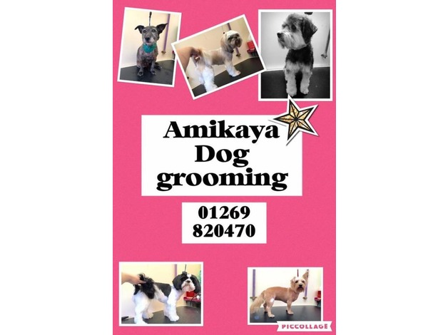 Amikaya Dog grooming  in Ammanford