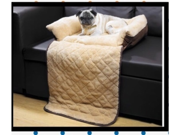 Pet Sofa bed in Ashbourne