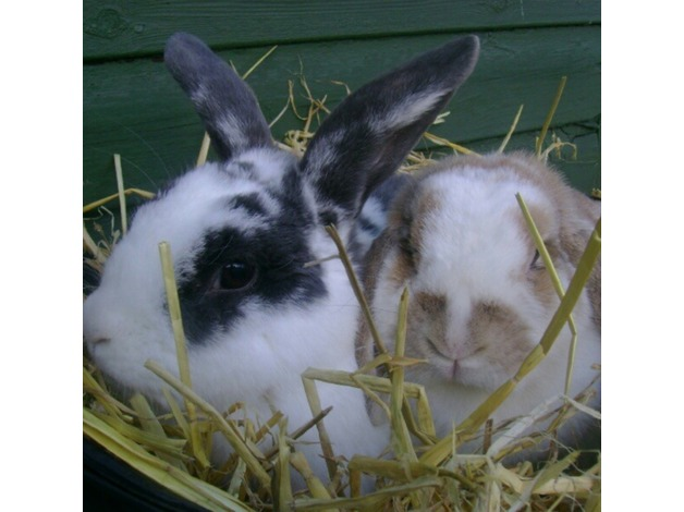 Luxury Rabbit Boarding and Pet Sitting in Biggar