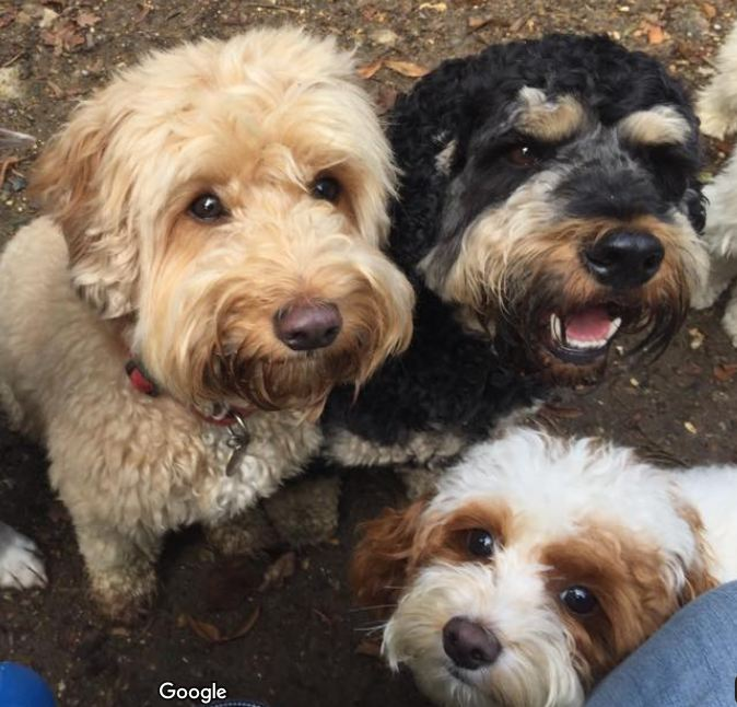 Dog Day Care in Borehamwood (Pets & Animals - Pet Services) - 1