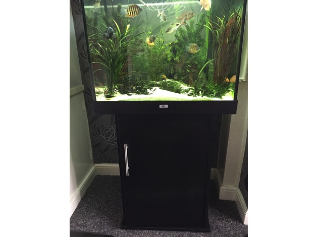 Fish tank and fish in Cardiff