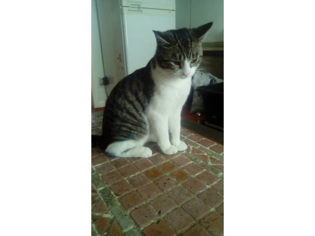 Please help find my cat in Crook