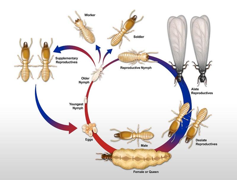 Best Termite Control Services in Noida (Pets & Animals - Birds)