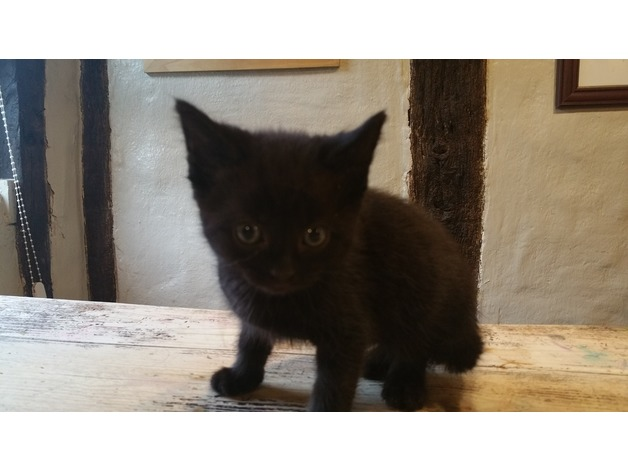 Lovely and tame kittens for sale in Diss