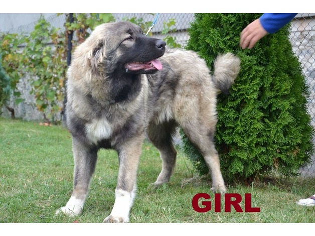 Caucasian Big Girl 8 months old for sale in Ealing