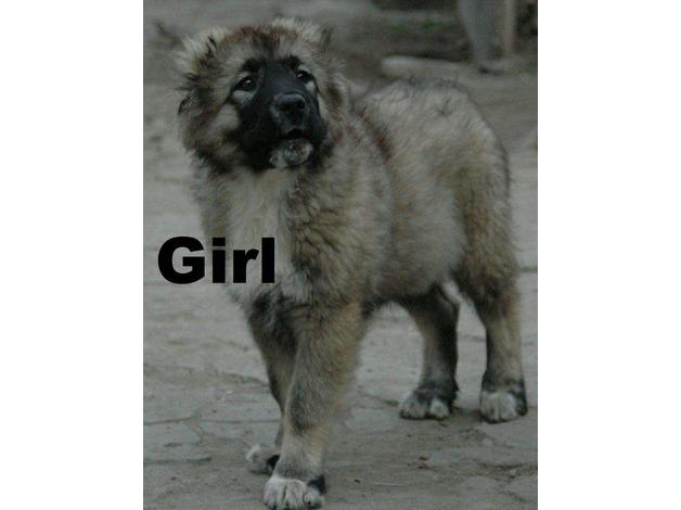 Lovely caucasian Girls Pups in Ealing