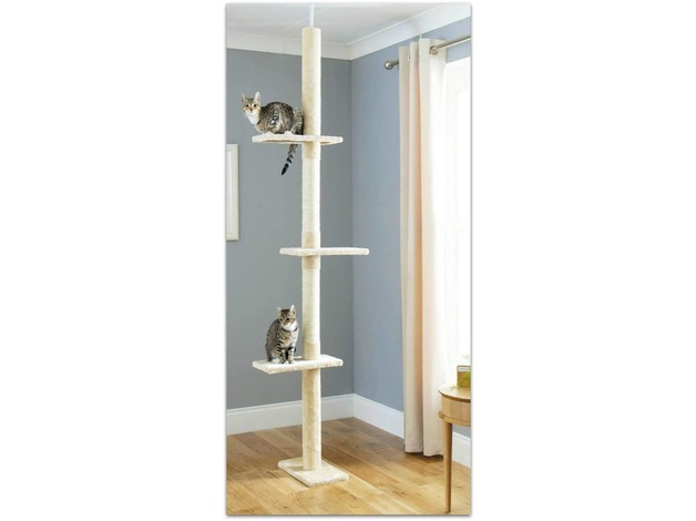 Floor to Ceiling Cat Tree in Edinburgh