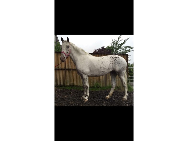 Potential pony club/mother daughter share  in Gloucester