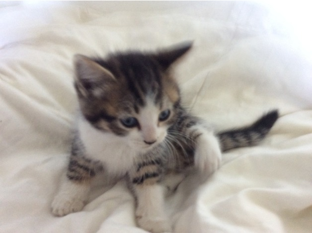 Beautiful Kittens for sale in Hungerford