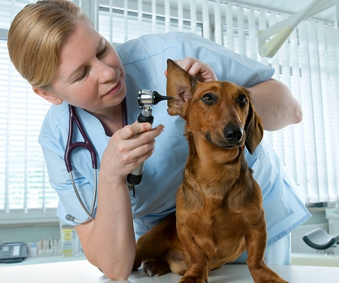 Cat and Dog Pet Skin Problems Treatments From Virtual Vet Derms (Pets & Animals - Pet Services) - 1
