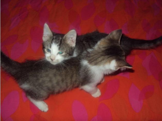 5 Loving kittens for sale: 1 ginger, three tabbies and one tortoiseshell in Lambeth