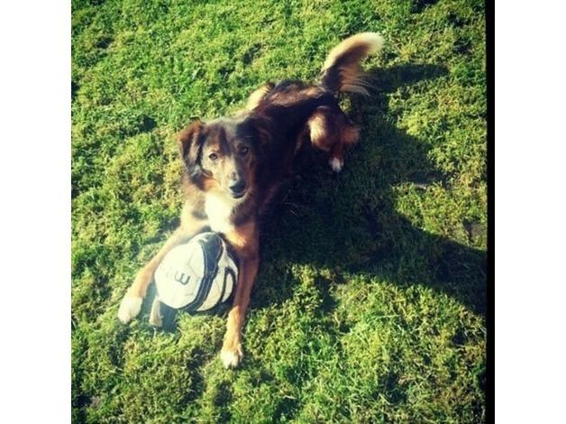 Missing harry the dog  in Nottingham