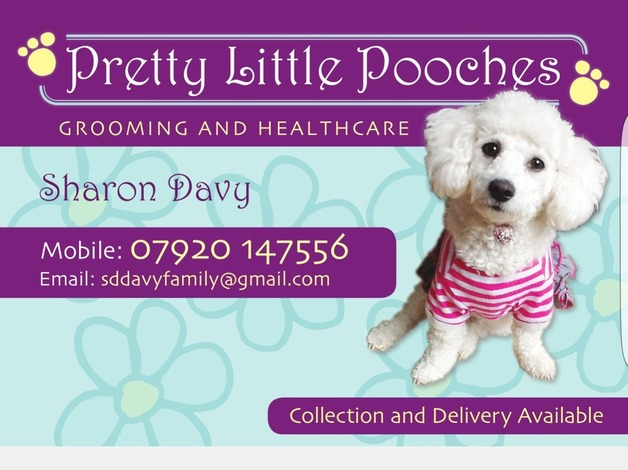 Pretty little pooches dog grooming and healthcare in Peterborough