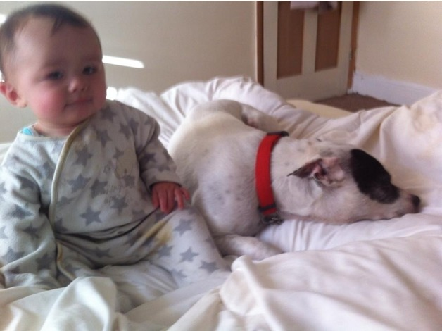 FOSTER/FOREVER HOMES URGENTLY REQUIRED FOR RESCUE STAFFIE DOGS in Plymouth