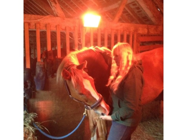 Reiki attunements Reiki healing horse healing/ communication in Rhayader - 1