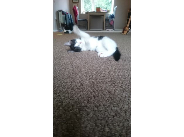 Beautiful kittens for sale in Rotherham