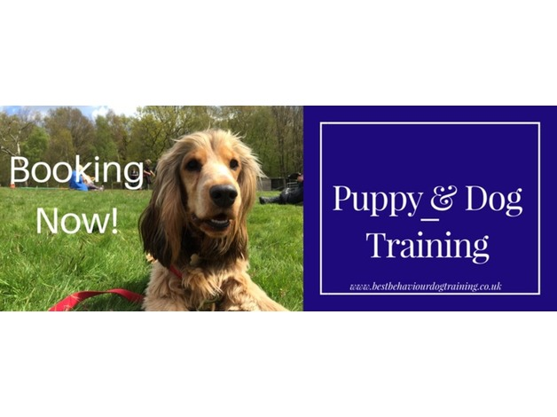 Dog Training Classes in Stowmarket