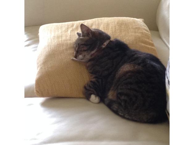 Missing tabby cat in Swansea
