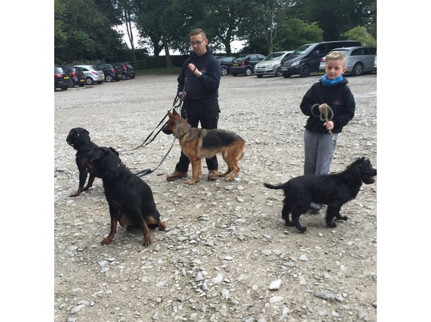 Professional one-to-one dog training  in Wakefield