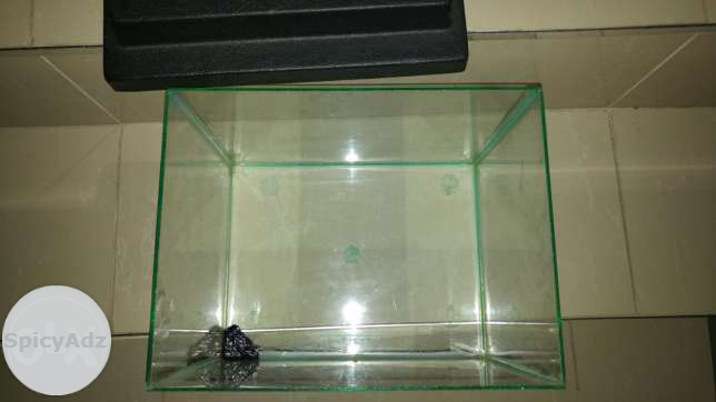 1 foot fish tank in Durban