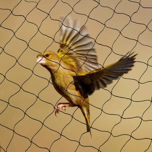 Best Bird netting in Bangalore (Pets & Animals - Birds)